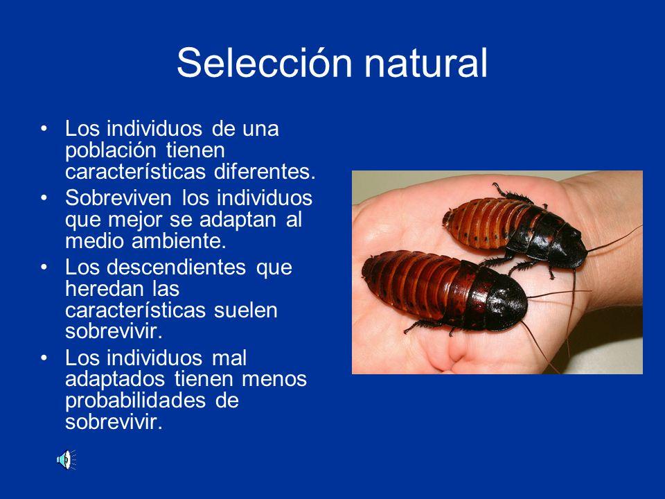 Selección natural Los individuos de una población tienen características diferentes.