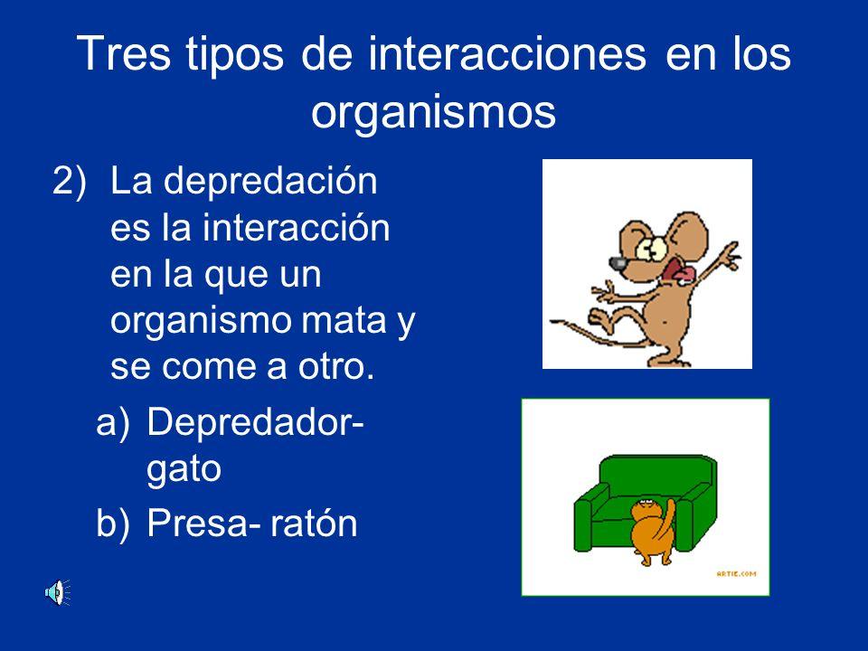 Tres tipos de interacciones en los organismos 2)La depredación es la interacción en la que un organismo mata y se come a otro.