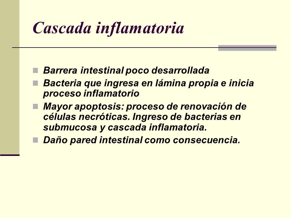 Cascada inflamatoria Barrera intestinal poco desarrollada Bacteria que ingresa en lámina propia e inicia proceso inflamatorio Mayor apoptosis: proceso