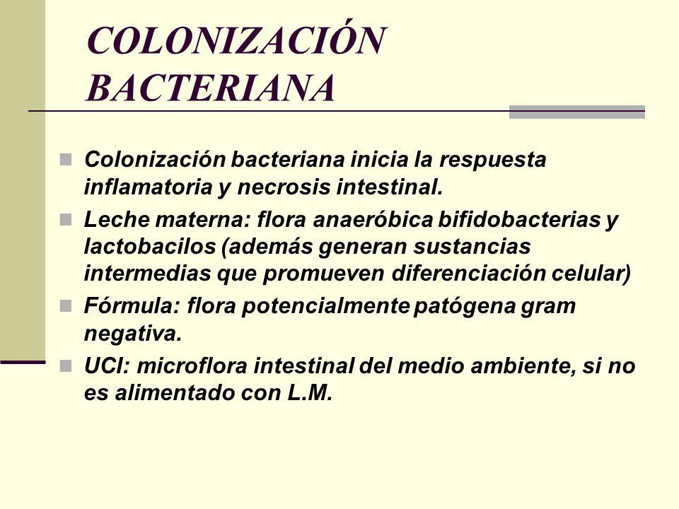 COLONIZACIÓN BACTERIANA Colonización bacteriana inicia la respuesta inflamatoria y necrosis intestinal. Leche materna: flora anaeróbica bifidobacteria