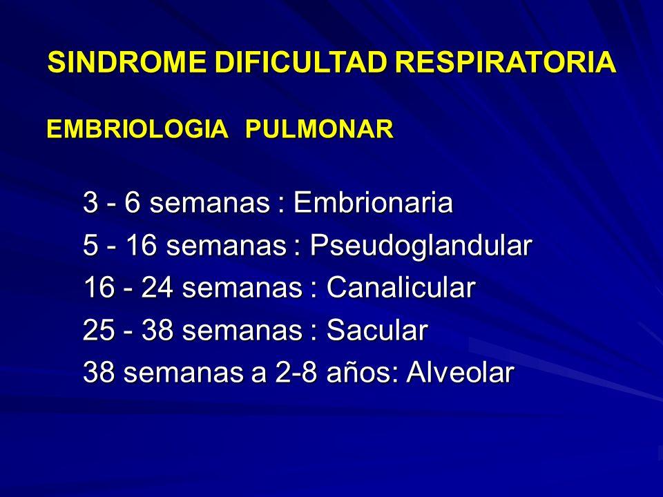 EMBRIOLOGIA PULMONAR 3 - 6 semanas : Embrionaria 5 - 16 semanas : Pseudoglandular 16 - 24 semanas : Canalicular 25 - 38 semanas : Sacular 38 semanas a 2-8 años: Alveolar SINDROME DIFICULTAD RESPIRATORIA