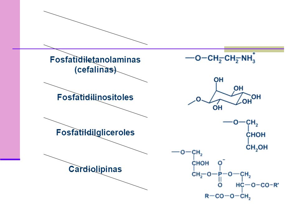 Fosfoacilgliceroles o Fosfogliceridos Contien glicerol esterificado en las posiciones 1 y 2 por dos cadenas de ácidos grasos Un grupo fosfato esterifi