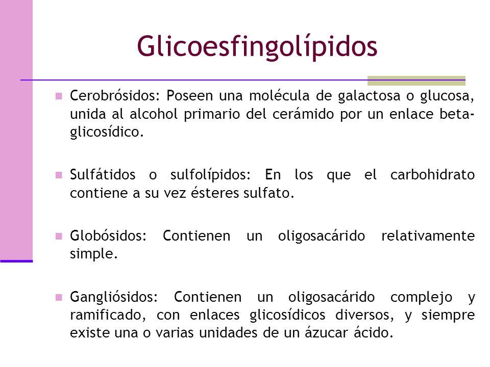 Glicoesfingolípidos Poseen siempre esfingosina y además algún carbohidrato. Son abundantes en las membranas del sistema nervioso central, sobre todo e