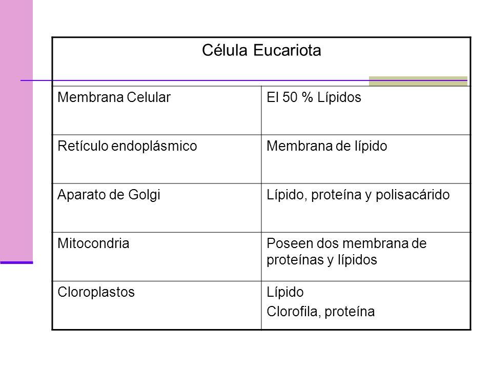 Célula Eucariota Membrana CelularEl 50 % Lípidos Retículo endoplásmicoMembrana de lípido Aparato de GolgiLípido, proteína y polisacárido MitocondriaPoseen dos membrana de proteínas y lípidos CloroplastosLípido Clorofila, proteína