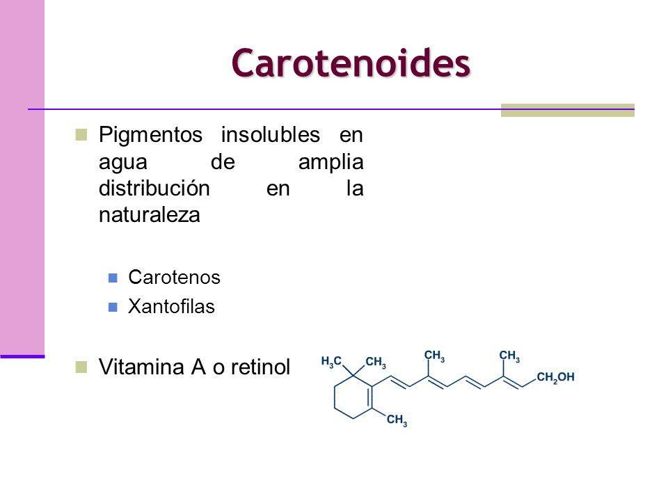 Carotenoides Pigmentos insolubles en agua de amplia distribución en la naturaleza Carotenos Xantofilas Vitamina A o retinol