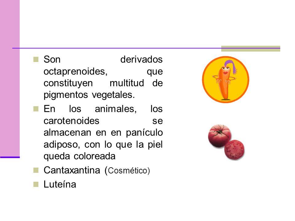 Son derivados octaprenoides, que constituyen multitud de pigmentos vegetales.