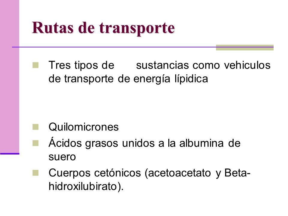 Rutas de transporte Tres tipos de sustancias como vehiculos de transporte de energía lípidica Quilomicrones Ácidos grasos unidos a la albumina de suero Cuerpos cetónicos (acetoacetato y Beta- hidroxilubirato).
