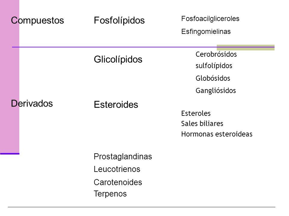 Compuestos Derivados Fosfolípidos Fosfoacilgliceroles Esfingomielinas Glicolípidos Cerobrósidos sulfolípidos Globósidos Gangliósidos Esteroides Esteroles Sales biliares Hormonas esteroideas Prostaglandinas Leucotrienos Carotenoides Terpenos