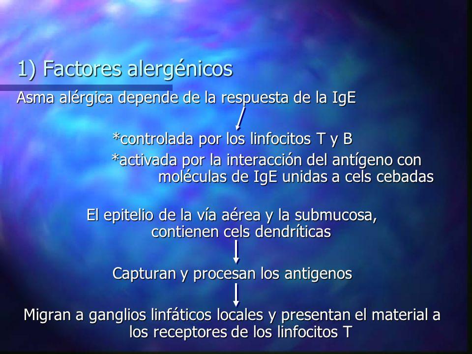 1) Factores alergénicos Asma alérgica depende de la respuesta de la IgE *controlada por los linfocitos T y B *activada por la interacción del antígeno con moléculas de IgE unidas a cels cebadas El epitelio de la vía aérea y la submucosa, contienen cels dendríticas Capturan y procesan los antigenos Migran a ganglios linfáticos locales y presentan el material a los receptores de los linfocitos T