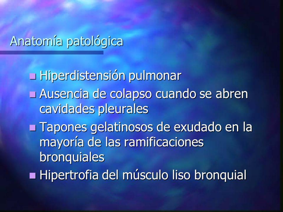 Anatomía patológica Hiperdistensión pulmonar Hiperdistensión pulmonar Ausencia de colapso cuando se abren cavidades pleurales Ausencia de colapso cuando se abren cavidades pleurales Tapones gelatinosos de exudado en la mayoría de las ramificaciones bronquiales Tapones gelatinosos de exudado en la mayoría de las ramificaciones bronquiales Hipertrofia del músculo liso bronquial Hipertrofia del músculo liso bronquial