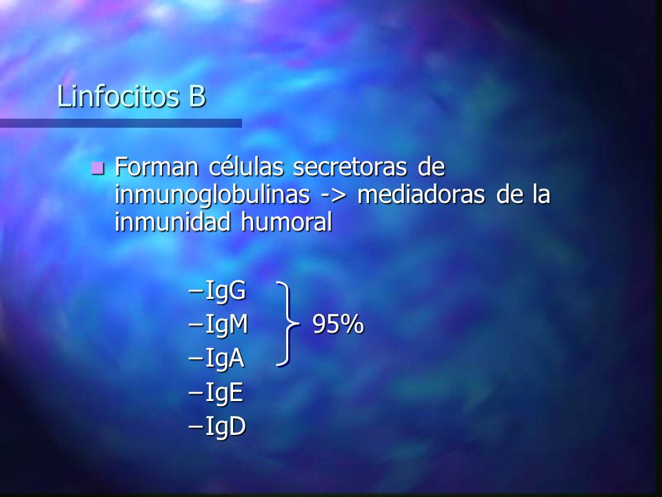 Linfocitos B Forman células secretoras de inmunoglobulinas -> mediadoras de la inmunidad humoral Forman células secretoras de inmunoglobulinas -> mediadoras de la inmunidad humoral –IgG –IgM 95% –IgA –IgE –IgD