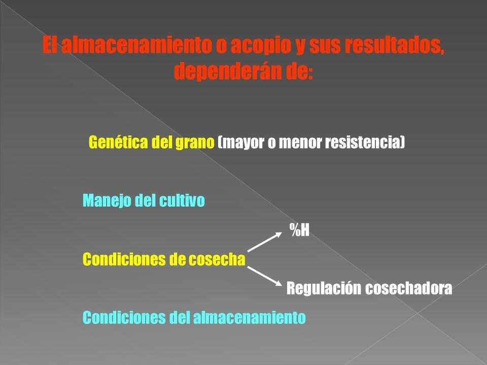 El almacenamiento o acopio y sus resultados, dependerán de: Genética del grano (mayor o menor resistencia) Manejo del cultivo %H Condiciones de cosech