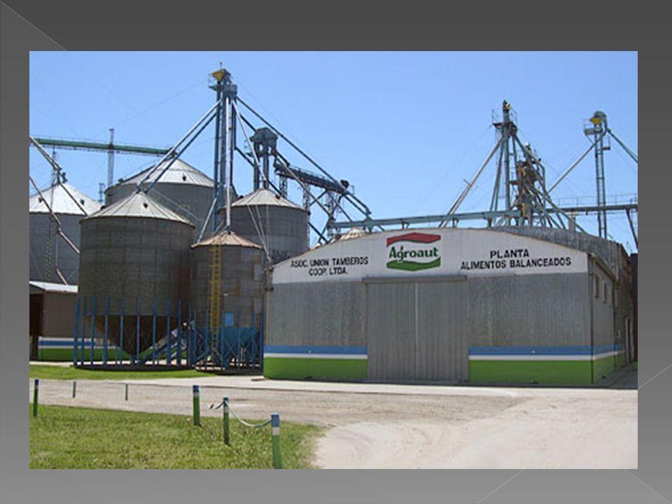 Tipo de granoBajo *Bajo- Medio Medio- Alto Maíz - Trigo - Soja (14 %) Girasol (11 %) 6 meses12 meses18 meses Maíz -Trigo - Soja (14 a 16 %) Girasol (11 a 16 %) 2 meses6 meses12 meses Maíz - Trigo - Soja ( + de 16 %) Girasol (+ de 16 %) 1 mes2 meses3 meses * En grano para semillas, este valor debe ser 1 a 2 % menor TABLA 2: RIESGO POR TIEMPO DE ALMACENAMIENTO (valores orientativos)