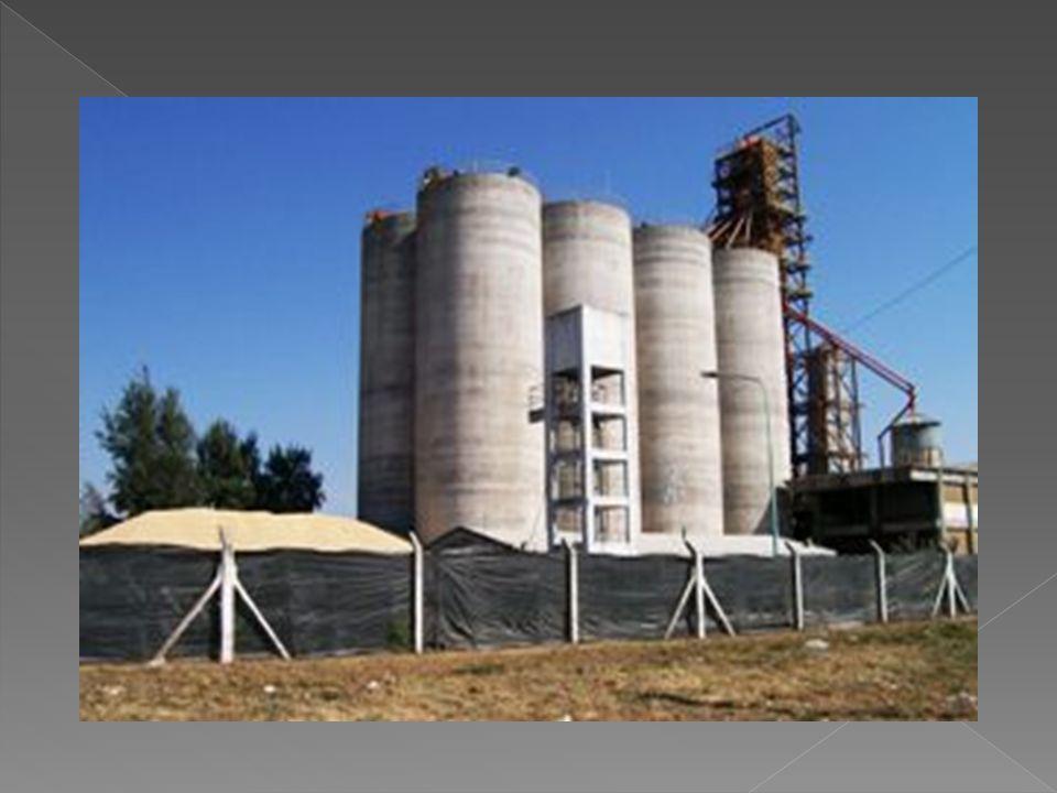 HONGOS: la proliferación de hongos en el silo produce calor, olor y pérdida de calidad.