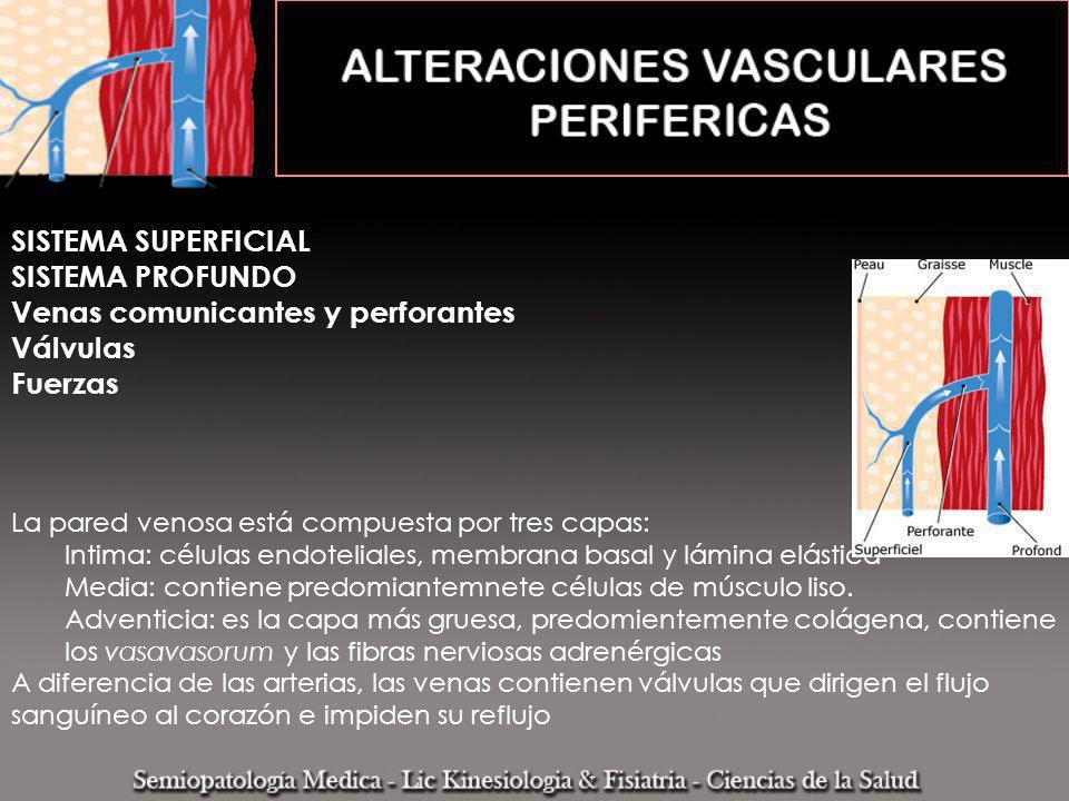SISTEMA SUPERFICIAL SISTEMA PROFUNDO Venas comunicantes y perforantes Válvulas Fuerzas La pared venosa está compuesta por tres capas: Intima: células