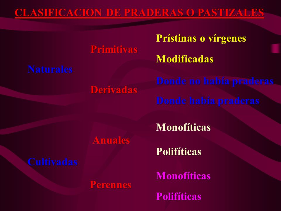 CLASIFICACION DE PRADERAS O PASTIZALES Prístinas o vírgenes Prístinas o vírgenes Primitivas Primitivas Modificadas Modificadas Naturales Naturales Don