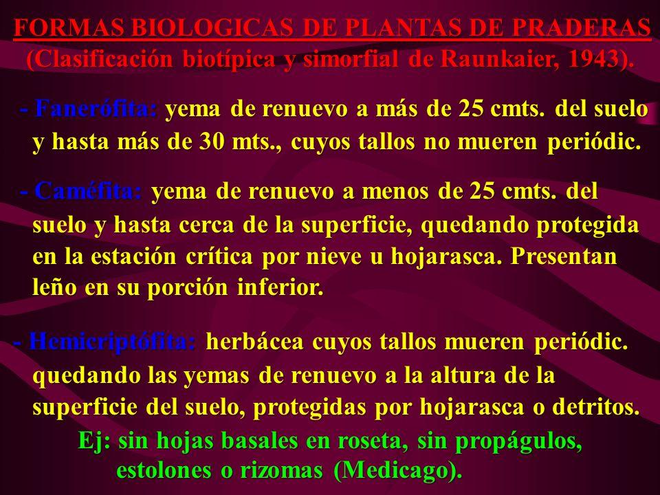 FORMAS BIOLOGICAS DE PLANTAS DE PRADERAS (Clasificación biotípica y simorfial de Raunkaier, 1943). (Clasificación biotípica y simorfial de Raunkaier,