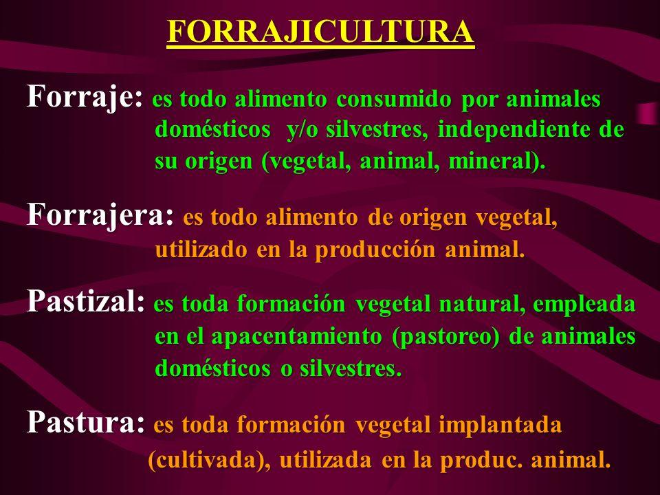 FORRAJICULTURA Forraje: es todo alimento consumido por animales Forraje: es todo alimento consumido por animales domésticos y/o silvestres, independie