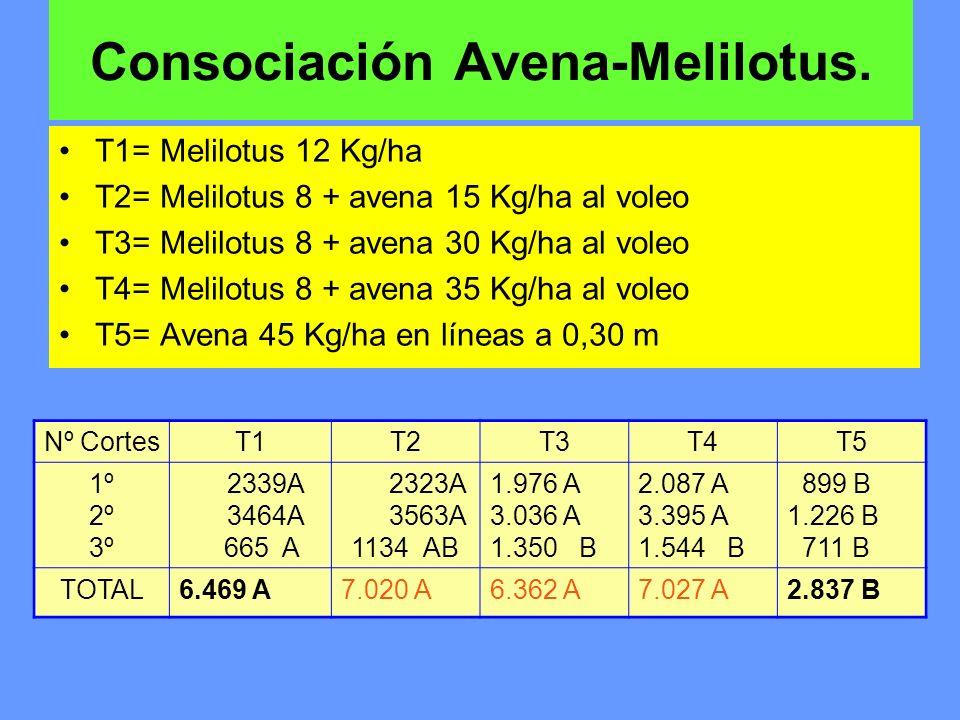 Consociación Avena-Melilotus. T1= Melilotus 12 Kg/ha T2= Melilotus 8 + avena 15 Kg/ha al voleo T3= Melilotus 8 + avena 30 Kg/ha al voleo T4= Melilotus