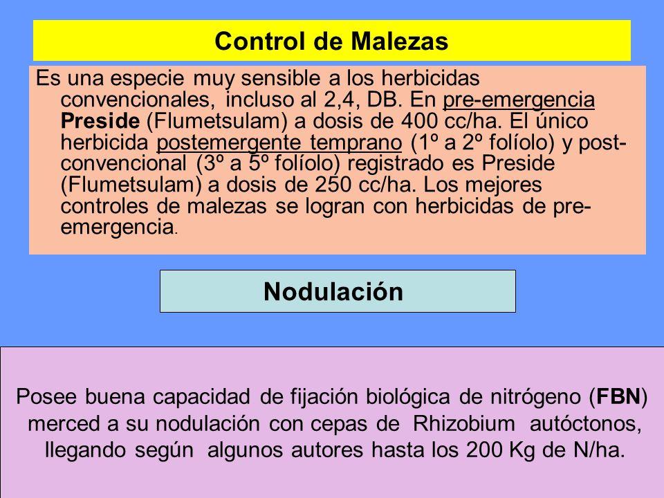 Control de Malezas Es una especie muy sensible a los herbicidas convencionales, incluso al 2,4, DB. En pre-emergencia Preside (Flumetsulam) a dosis de