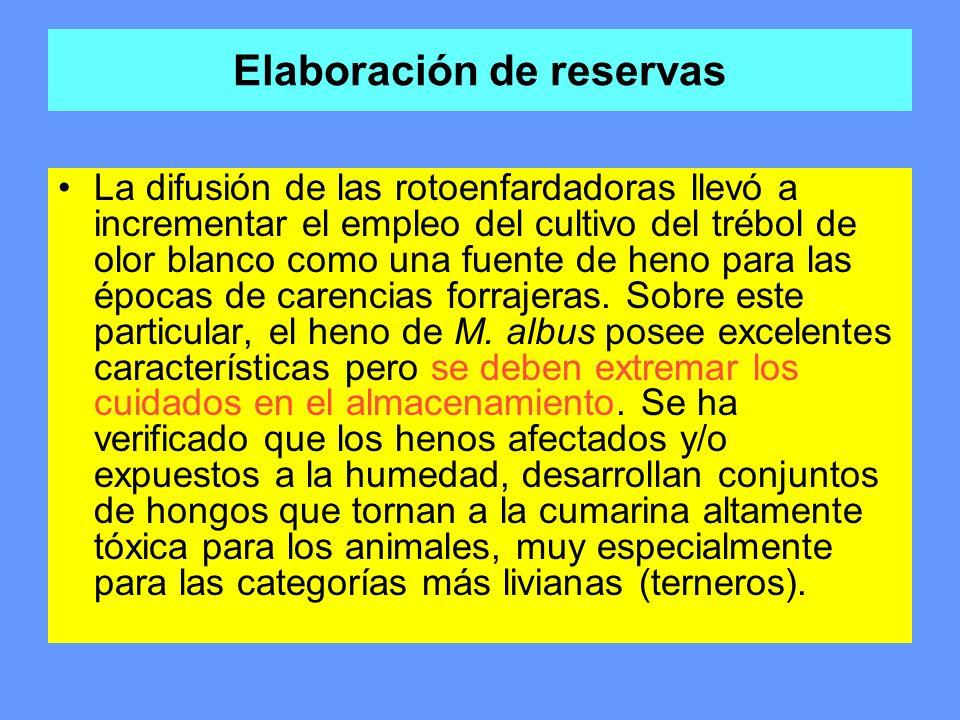 Elaboración de reservas La difusión de las rotoenfardadoras llevó a incrementar el empleo del cultivo del trébol de olor blanco como una fuente de hen