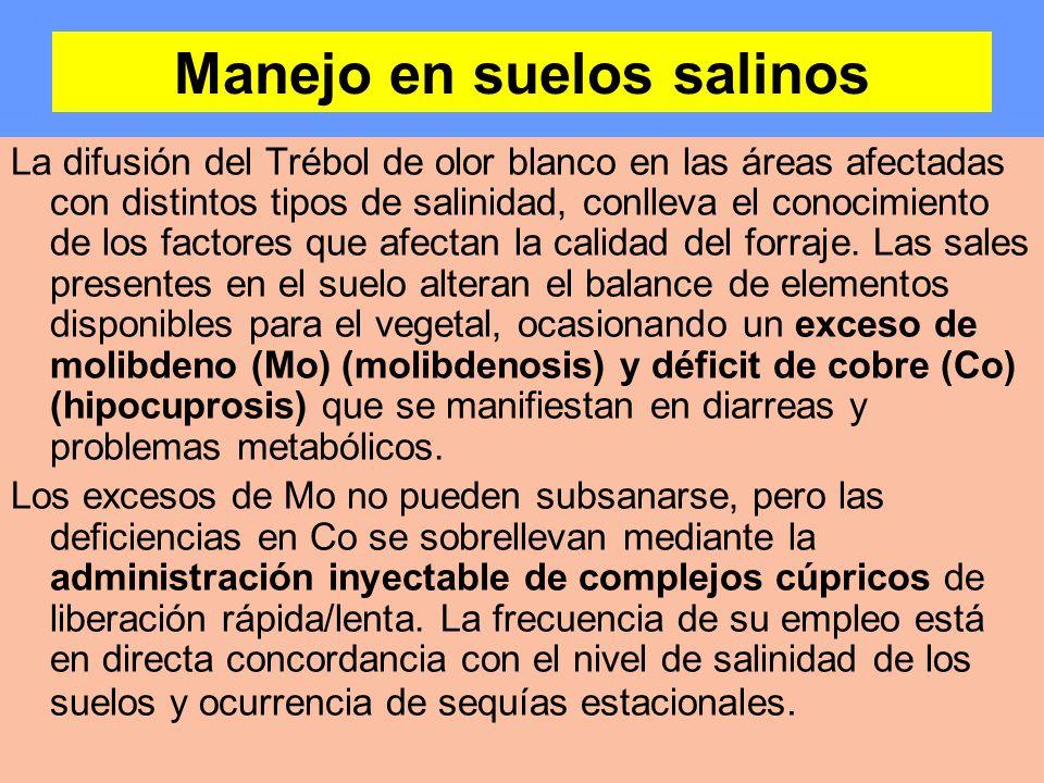 Manejo en suelos salinos La difusión del Trébol de olor blanco en las áreas afectadas con distintos tipos de salinidad, conlleva el conocimiento de lo