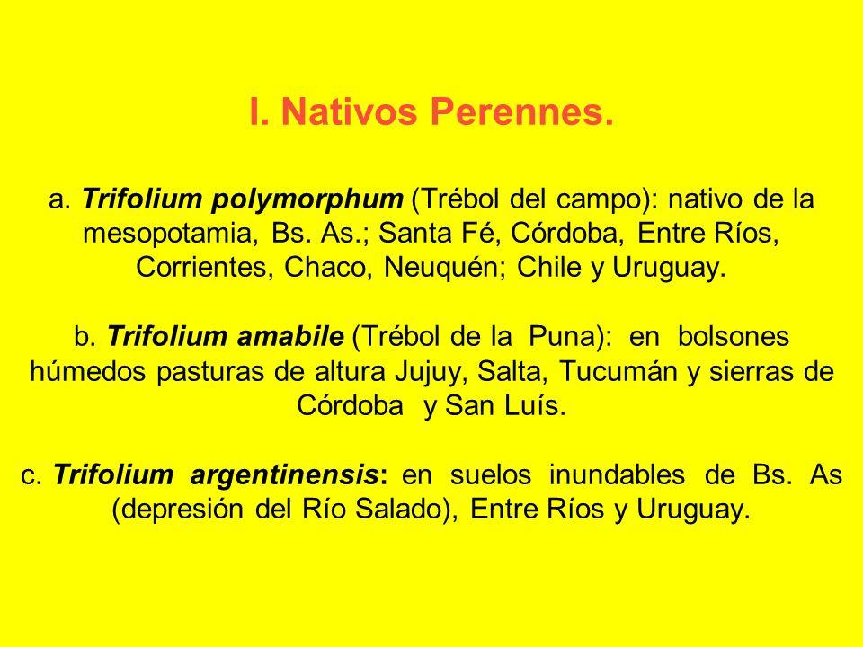 I. Nativos Perennes. a. Trifolium polymorphum (Trébol del campo): nativo de la mesopotamia, Bs. As.; Santa Fé, Córdoba, Entre Ríos, Corrientes, Chaco,