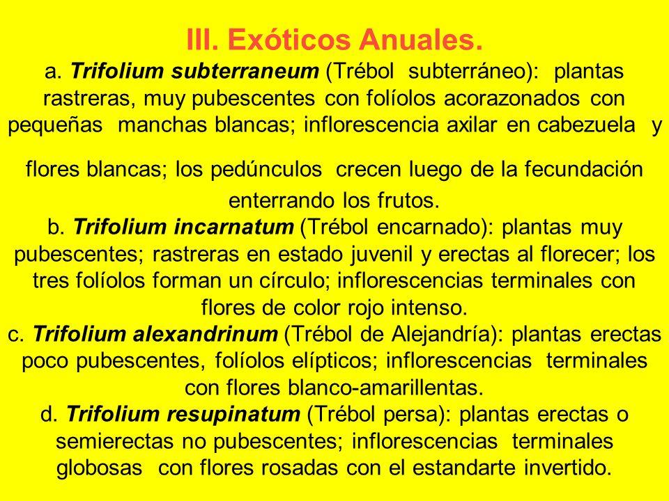 III. Exóticos Anuales. a. Trifolium subterraneum (Trébol subterráneo): plantas rastreras, muy pubescentes con folíolos acorazonados con pequeñas manch