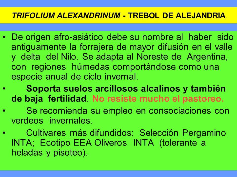TRIFOLIUM ALEXANDRINUM - TREBOL DE ALEJANDRIA De origen afro-asiático debe su nombre al haber sido antiguamente la forrajera de mayor difusión en el v