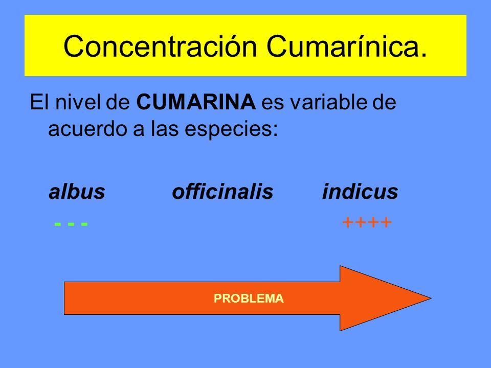 Concentración Cumarínica. El nivel de CUMARINA es variable de acuerdo a las especies: albus officinalis indicus - - - ++++ PROBLEMA