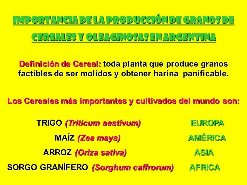 Tipos de Trigo cultivados en Argentina Triticum aestivum (Trigo pan; trigo duro) Triticum turgidum var.