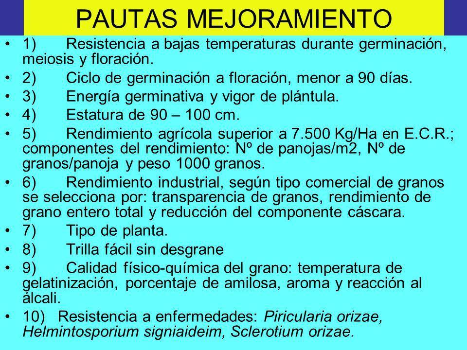 PAUTAS MEJORAMIENTO 1) Resistencia a bajas temperaturas durante germinación, meiosis y floración. 2) Ciclo de germinación a floración, menor a 90 días