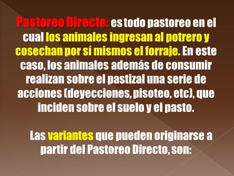 Pastoreo Directo: Pastoreo Directo: es todo pastoreo en el cual los animales ingresan al potrero y cosechan por sí mismos el forraje. En este caso, lo