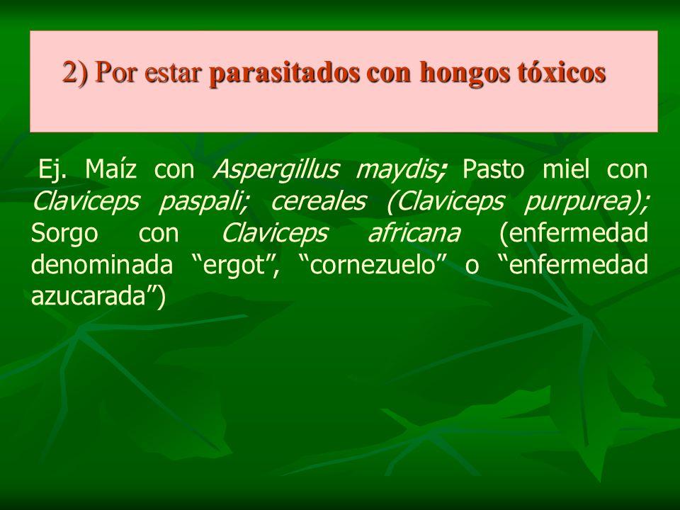 2) Por estar parasitados con hongos tóxicos Ej. Maíz con Aspergillus maydis; Pasto miel con Claviceps paspali; cereales (Claviceps purpurea); Sorgo co
