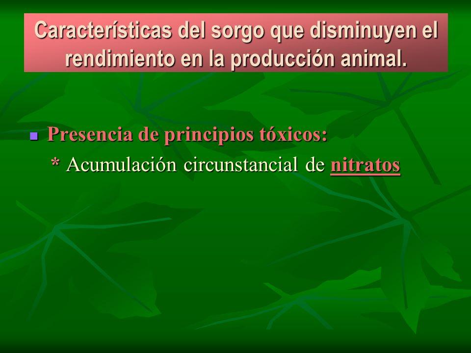 Características del sorgo que disminuyen el rendimiento en la producción animal. Presencia de principios tóxicos: Presencia de principios tóxicos: * A