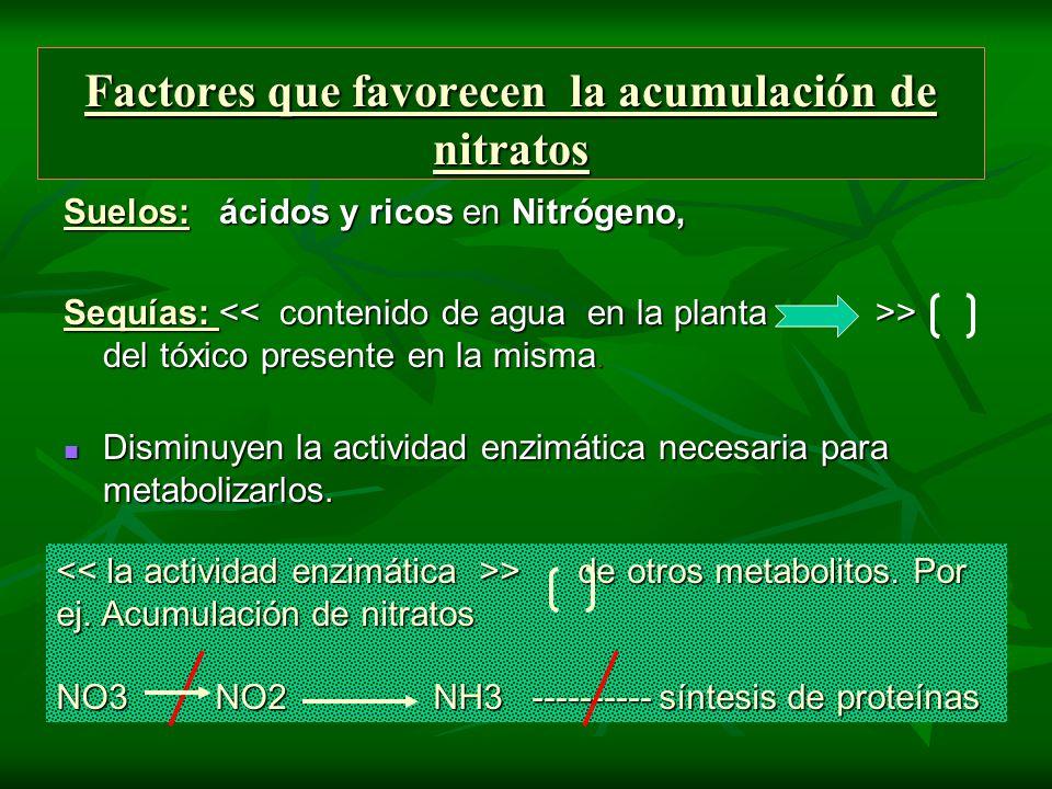 Factores que favorecen la acumulación de nitratos Suelos: ácidos y ricos en Nitrógeno, Sequías: > del tóxico presente en la misma. Disminuyen la activ