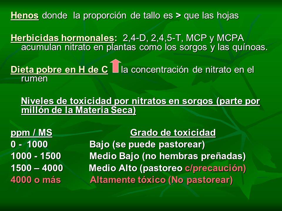 Henos donde la proporción de tallo es > que las hojas Herbicidas hormonales: 2,4-D, 2,4,5-T, MCP y MCPA acumulan nitrato en plantas como los sorgos y