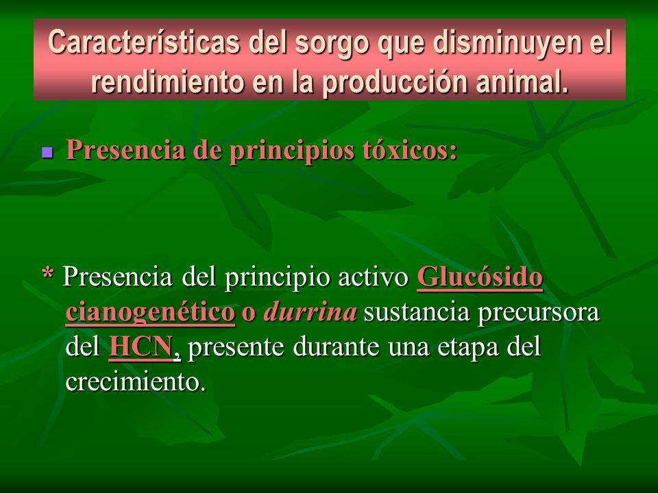 Características del sorgo que disminuyen el rendimiento en la producción animal. Presencia de principios tóxicos: Presencia de principios tóxicos: * P