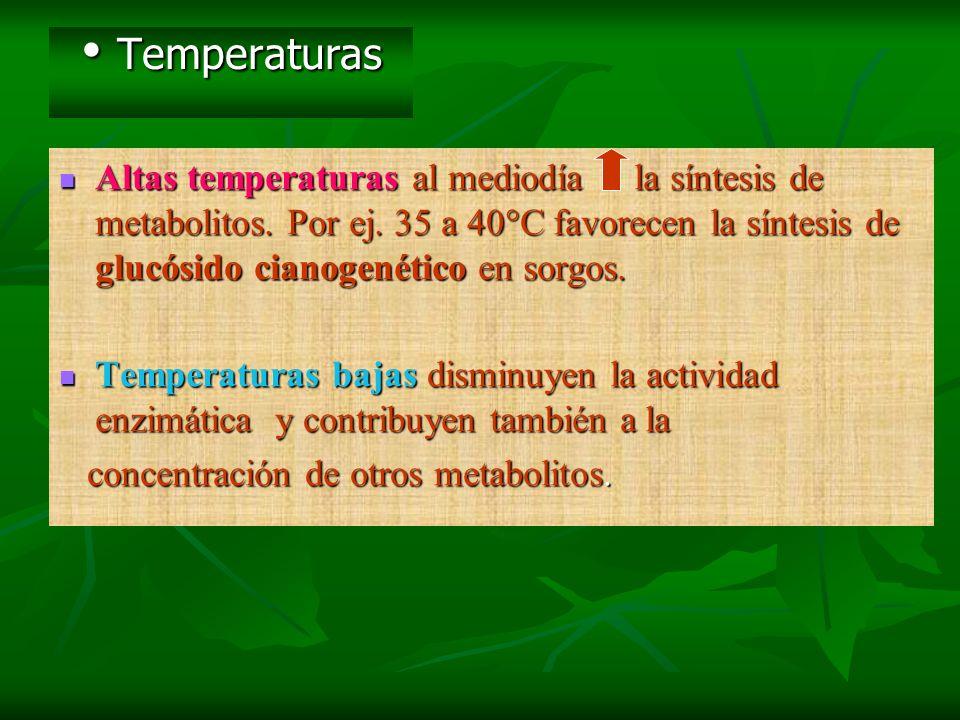 Temperaturas Temperaturas Altas temperaturas al mediodía la síntesis de metabolitos. Por ej. 35 a 40°C favorecen la síntesis de glucósido cianogenétic