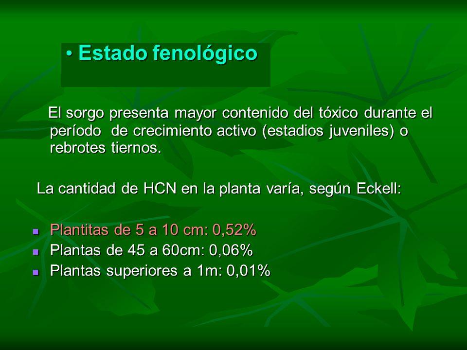 Estado fenológico Estado fenológico El sorgo presenta mayor contenido del tóxico durante el período de crecimiento activo (estadios juveniles) o rebro