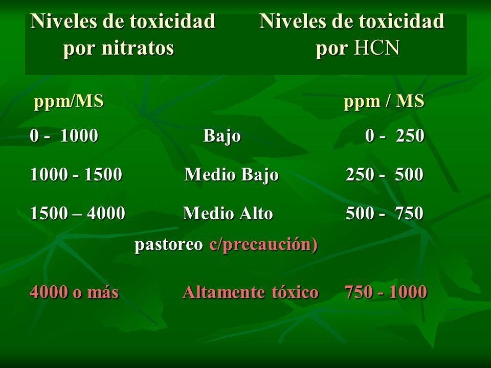 Niveles de toxicidad Niveles de toxicidad por nitratos por HCN Niveles de toxicidad Niveles de toxicidad por nitratos por HCN ppm/MS ppm / MS ppm/MS p