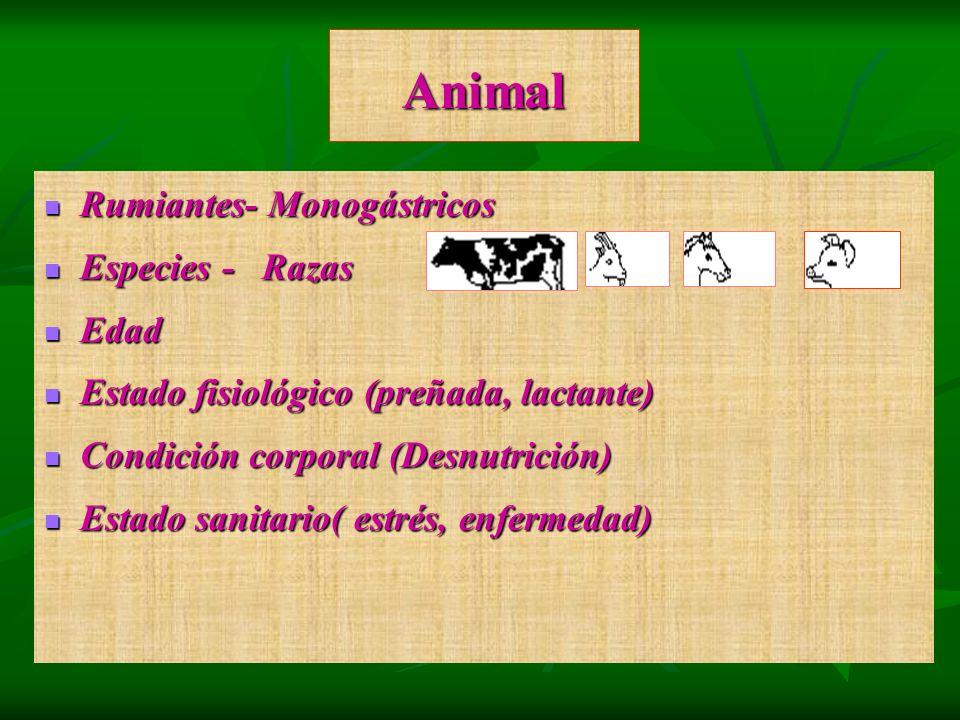 Animal Rumiantes- Monogástricos Rumiantes- Monogástricos Especies - Razas Especies - Razas Edad Edad Estado fisiológico (preñada, lactante) Estado fis