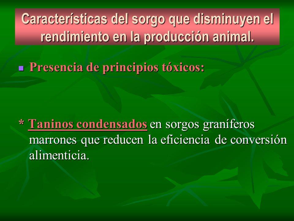 Características del sorgo que disminuyen el rendimiento en la producción animal. Presencia de principios tóxicos: Presencia de principios tóxicos: * T