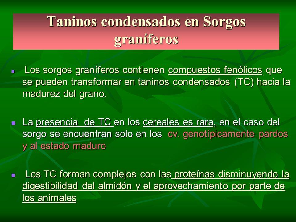 Taninos condensados en Sorgos graníferos Los sorgos graníferos contienen compuestos fenólicos que se pueden transformar en taninos condensados (TC) ha