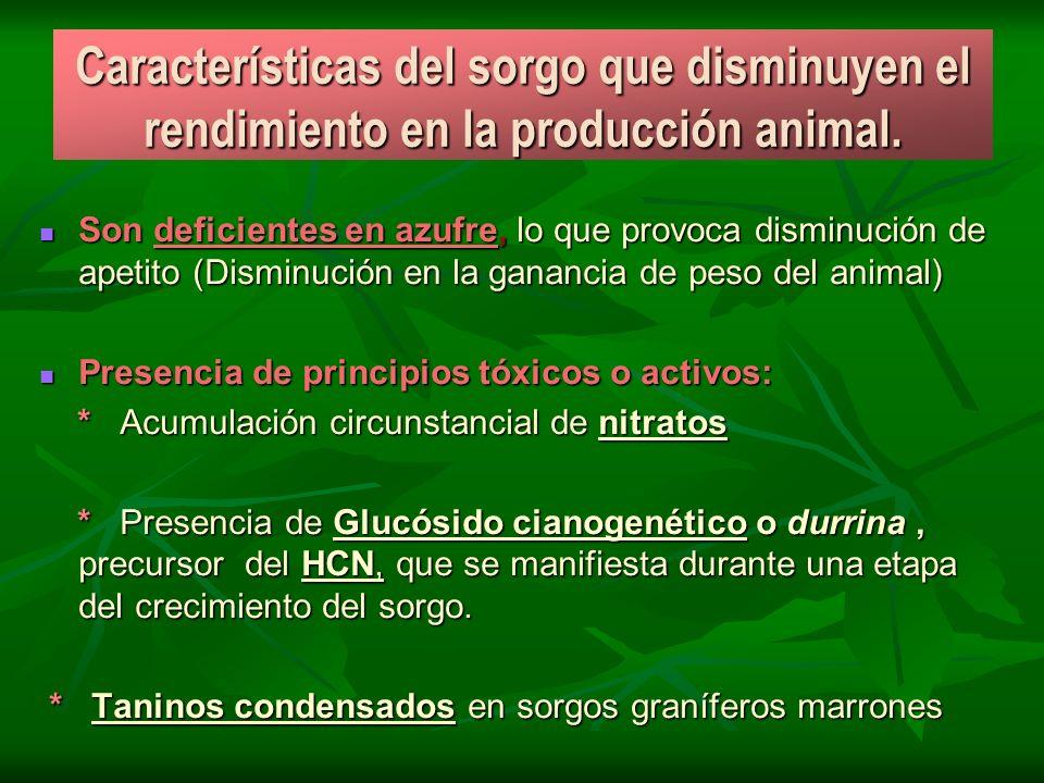 Características del sorgo que disminuyen el rendimiento en la producción animal. Son deficientes en azufre, lo que provoca disminución de apetito (Dis