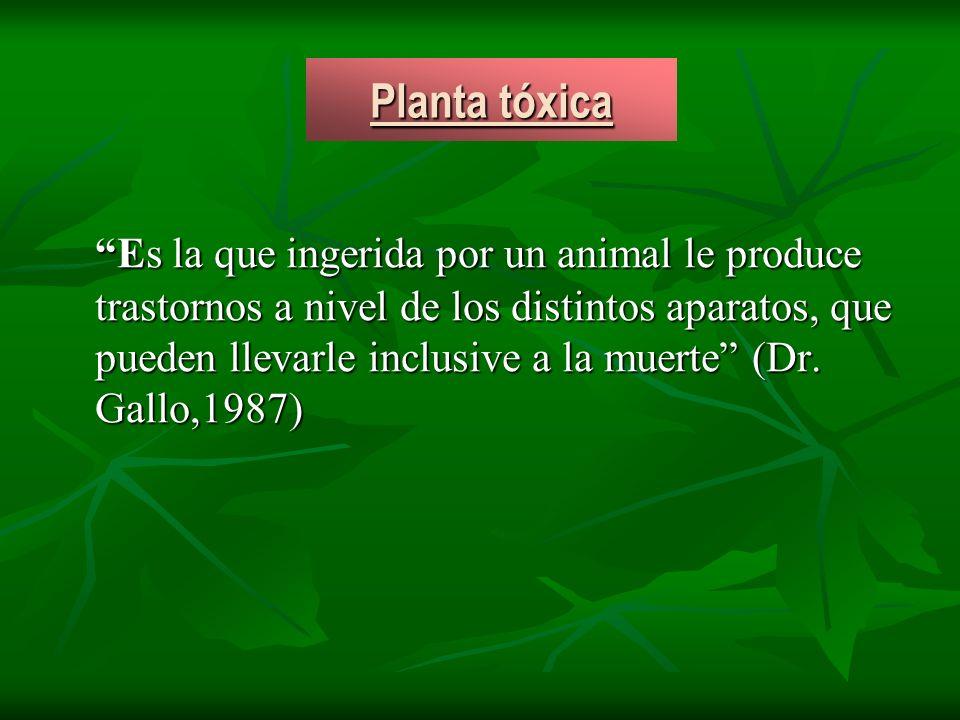 Planta tóxica Es la que ingerida por un animal le produce trastornos a nivel de los distintos aparatos, que pueden llevarle inclusive a la muerte (Dr.