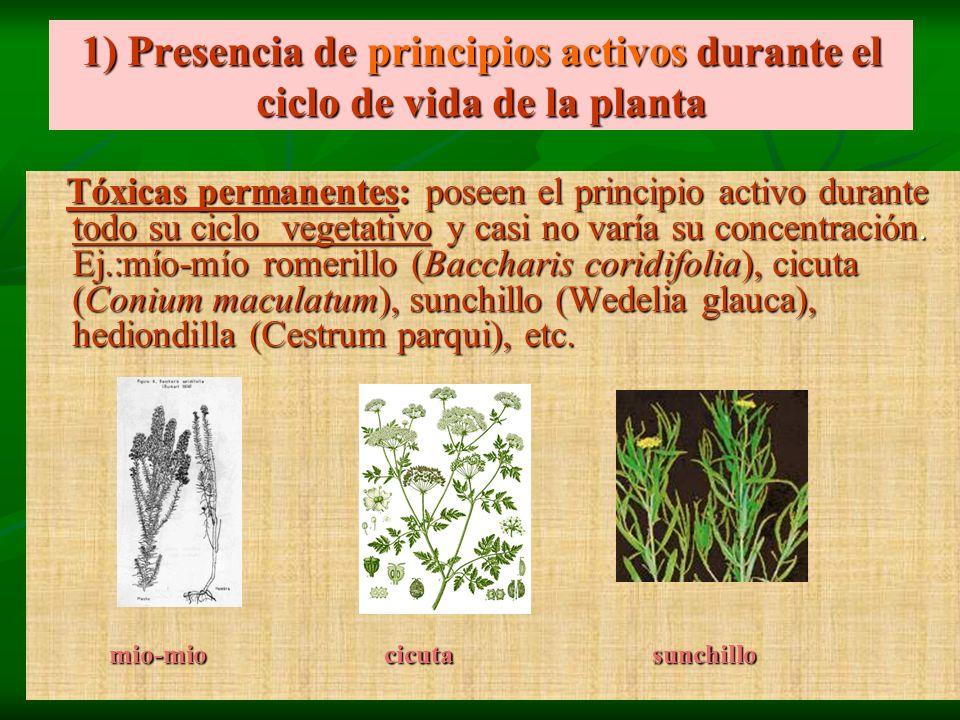 1) Presencia de principios activos durante el ciclo de vida de la planta Tóxicas permanentes: poseen el principio activo durante todo su ciclo vegetat