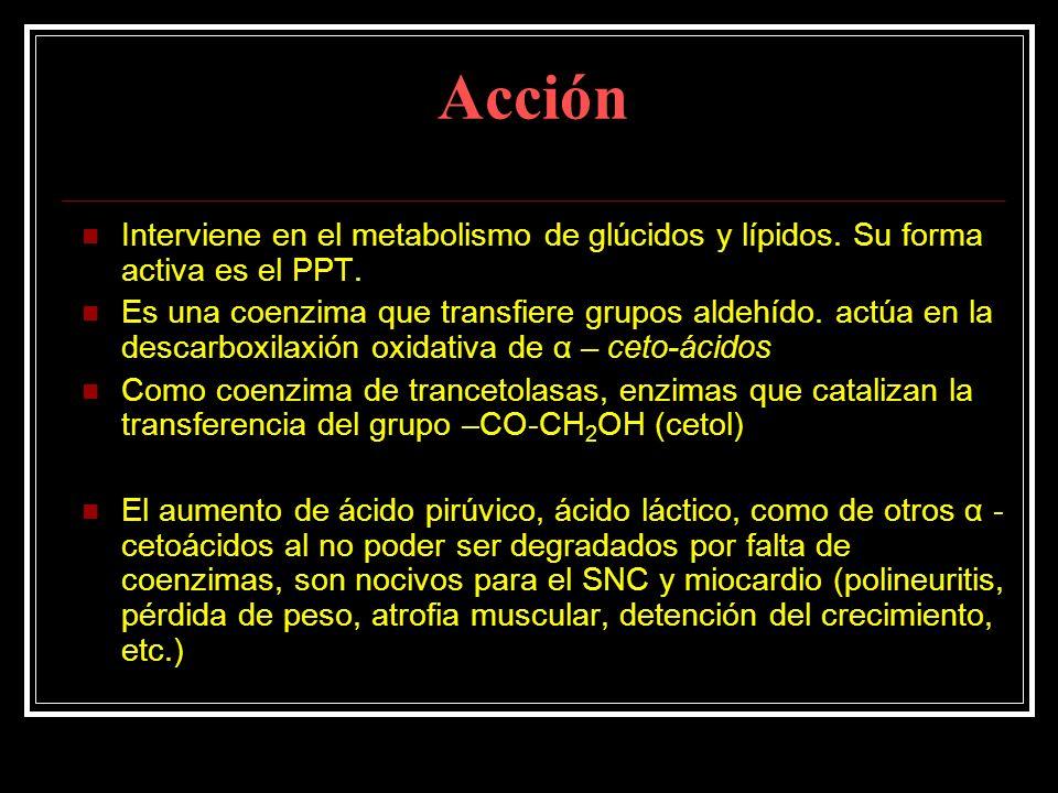 Acción Interviene en el metabolismo de glúcidos y lípidos. Su forma activa es el PPT. Es una coenzima que transfiere grupos aldehído. actúa en la desc
