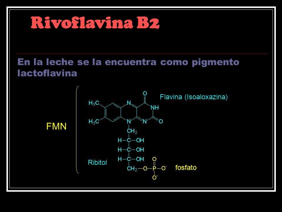 Rivoflavina B2 Flavina (Isoaloxazina) Ribitol fosfato FMN En la leche se la encuentra como pigmento lactoflavina