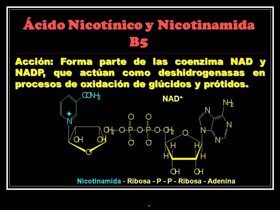 Ácido Nicotínico y Nicotinamida B5 Acción: Forma parte de las coenzima NAD y NADP, que actúan como deshidrogenasas en procesos de oxidación de glúcido